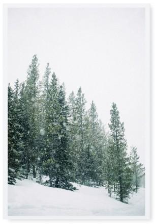 """Tafelgut, Karte """"Forest"""""""