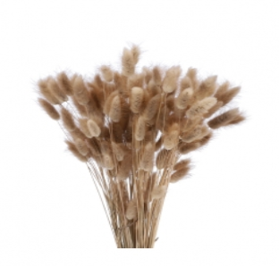 Trockenblumen Lagurus im Bund, natur