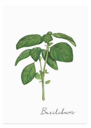 Eulenschnitt Kräuterkarte Basilikum
